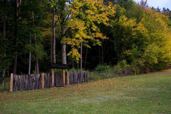 Spacery leśne i nad stawem